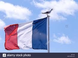 French Flag Banner Blue France Flag French White Red Seagull Gull Blue Bird