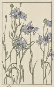 decorative flower botanicals jeannie foord decorative plant and flower studies