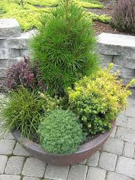 best 25 trees and shrubs ideas on yellow shrubs best