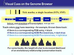Dark Blue Meaning by Ucsc Genome Browser Tutorial Ppt Download