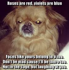 Roses Are Red Violets Are Blue Meme - roses are red violets are blue faces like yours belong in a zoo