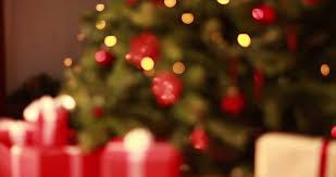 fir christmas tree conifer 4k stock video 679 634 214