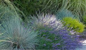 choosing ornamental grasses for their season of interest