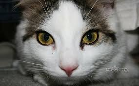 imagenes de gatitos sin frases beneficios de castrar a un gato 5 motivos de peso para esterilizar