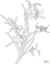 grasshopper on the plant coloring page free printable coloring pages