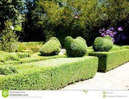 ornamental garden with sculpted hedges stock image image 41912529