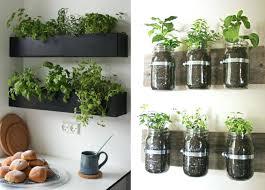 plantes cuisine interieur de la maison des plantes aromatiques en pot dans