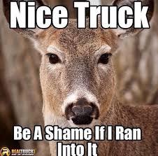 Bow Hunting Memes - nice truck be a shame if i ran into it deer meme deer hit my car