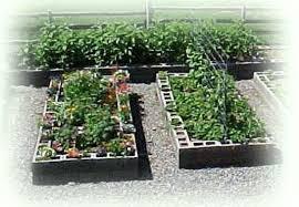 raised bed vegetable garden using cinder blocks the garden