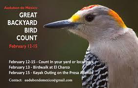 Audubon Backyard Bird Count by Sociedad Audubon De México A C
