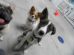 dog daycare floor plans doggy daycare dog and cat grooming tabby u0026 jack u0027s fitchburg wi