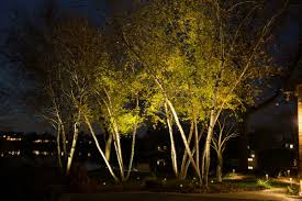 uplights on a grove of trees landscape lights and