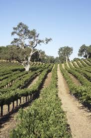 Vineyard Vineyards Pinterest