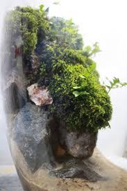 176 best images about indoor garden on pinterest miniature