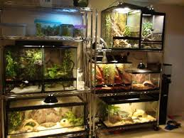 clean stylish reptile cages in an office doubling as storage