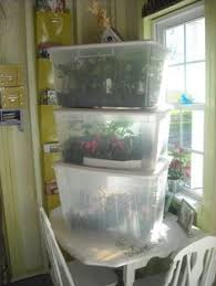 mini greenhouses just clear plastic storage boxes group the
