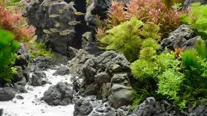 Live Plants In Community Aquariums by Using Co2 In The Planted Aquarium Pet Care Corner