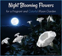 moon flowers blooming flowers a list of flowers to grow in your moon garden