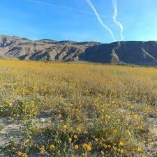 where is anza borrego anza borrego desert state park 1133 photos 189 reviews parks