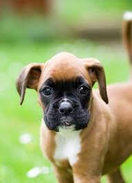 Cachorros hermosos