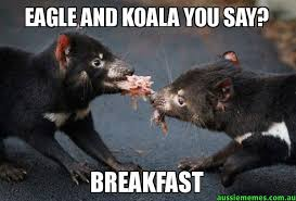 eagle and koala you say breakfast tasmanian devil aussie memes