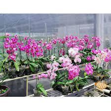 orchid ornamental plant nursery plant avm nursery chennai id