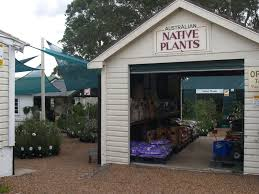 native plants sydney newcastle wildflower nursery glendale nsw