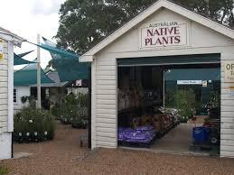 australian native plants nursery newcastle wildflower nursery glendale nsw