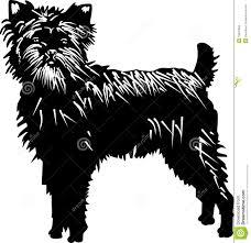 affenpinscher monkey dog affenpinscher dog royalty free stock images image 15837959