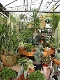 indoor plant display indoor plants at echter s