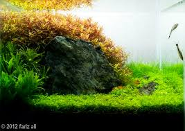 Aga Aquascape 42 Best Aquascape Images On Pinterest Aquascaping Aquariums And