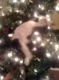 how to keep your cat out of the christmas tree the reluctant cat