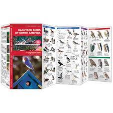 backyard birds of north america waterford field guide