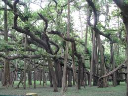 cool trees australian teacher exchange brian shelly alan and erin this really