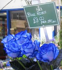 blue roses for sale file blue roses oxford market jpg wikimedia commons