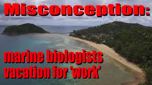 misconception marine biologists vacation for u0027work u0027 youtube