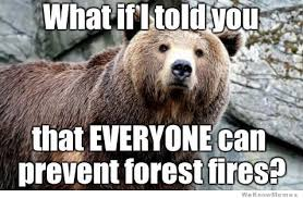 Hairless Bear Meme - bears page 12 kaiju combat community forums