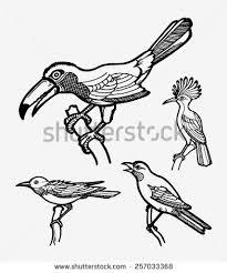 smooth clean detail bird sketches vector stock vector 257033368