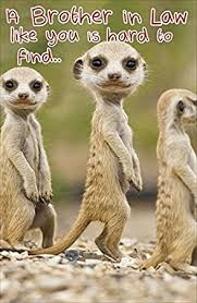 hanson white brother in law birthday card meerkats 7 25