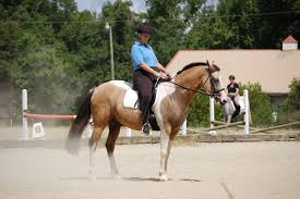 paint horse breed profile