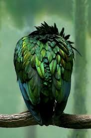 Color Green 2375 Best Everything Green Images On Pinterest Nature