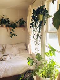 room with plants white walls and house plants from moon to moon plants walls and