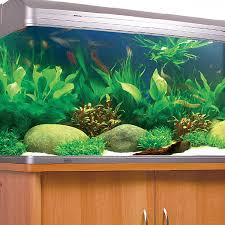 australian native aquatic plants aquarium stores in melbourne aquarium fish and tanks amazing amazon