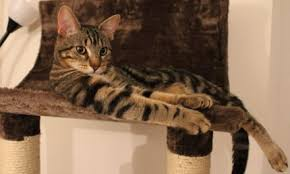 cool cat tree house time spent with a cat is never wasted
