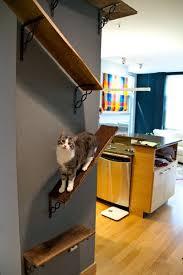 Wall Shelves For Cats Best 25 Cat Shelves Ideas On Pinterest Diy Cat Shelves Cat