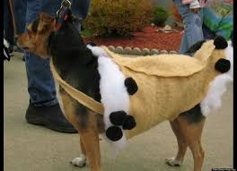 Pet Halloween Costumes Dogs 98 Dog Costumes Images Animals Costumes