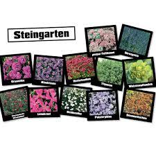 24 Kaufen Obi S Steingarten Stauden 24 Pflanzen Kaufen Bei Obi