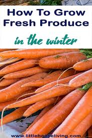 how to grow fresh produce in the winter winter rounding and