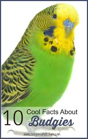 crayons and collars u2013 life with kids and pets 10 cool facts about