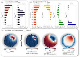 bioelectric gene and reaction networks computational modelling of